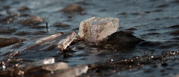 Foråret er lagt på is Blåvand 19.02-2016-1. Henrik Knudsen